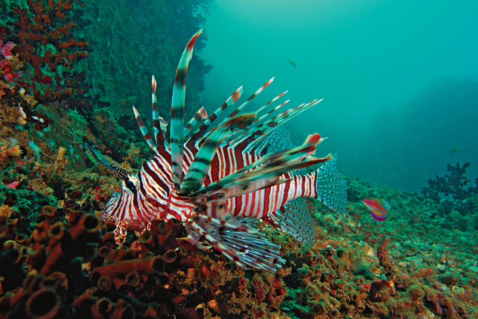 snorkeling at Hikkaduwa national park Image