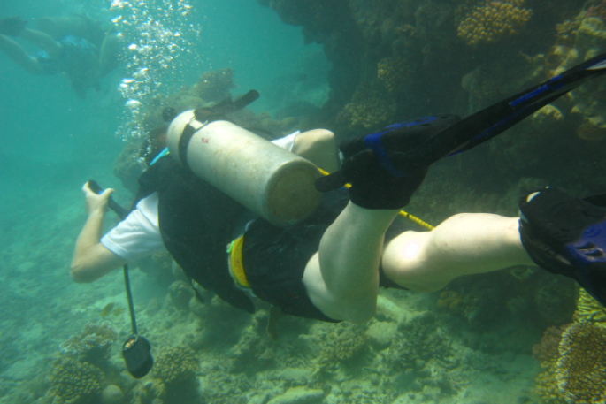 Diving in Negambo Image