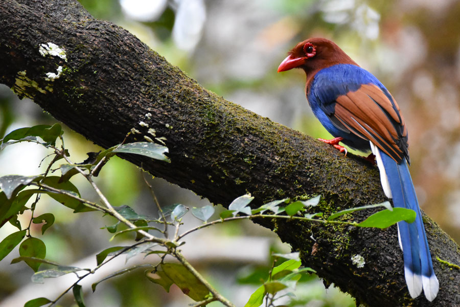 Bird watching tour at Sinharaja forest Image