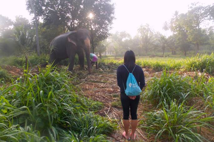 Spend the day with an elephant experience  Image